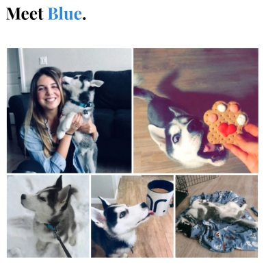 meetblue
